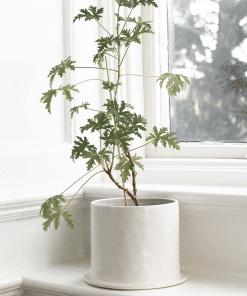 Sfeerfoto bloempot viksberg wit medium van Storefactory